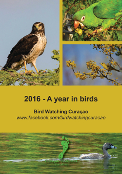 2016_A_year_in_birds_350 CFF 2016