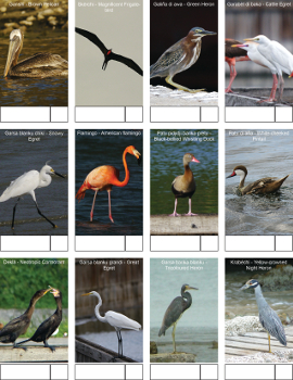 Bird telling kust 1 350px thumbnail