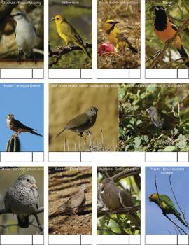 Bird telling tuin 1 350px thumbnail